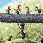 Bài học quản lý từ chuyện con kiến